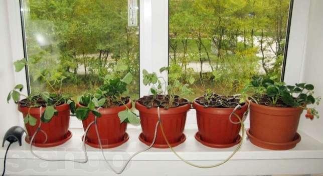 Гидропоника клубникой в домашних условиях
