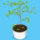 Комнатные растения — полив во время отпуска Фитодизайн интерьера